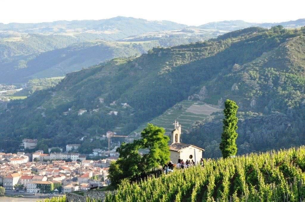 Vinmarker og skønne byer på denne cykelferie langs Rhône floden
